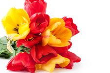 Free Tulips Royalty Free Stock Photography - 19425387