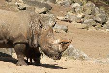 Free Rhinoceros Stock Image - 19425451