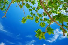 Free Green Leaves On Blue Sky Stock Photo - 19426430