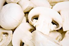 Free Champignon Mushrooms Stock Photos - 19427833