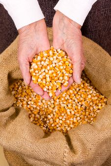 Free Old Woman Holding Corn Stock Image - 19428661