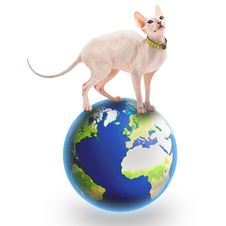 Free Don Sphynx Royalty Free Stock Image - 19428996