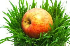 Free Apple In Grass Stock Photos - 19429223