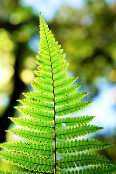 Fern Leaf Detail Stock Photography