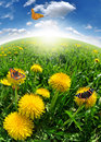 Free Dandelions Royalty Free Stock Image - 19430206