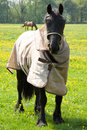 Free Horse With Eye Protector And Jacket Stock Images - 19435714