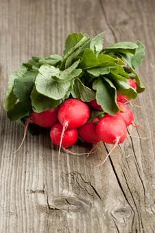 Free Fresh Radishes Royalty Free Stock Photo - 19430035