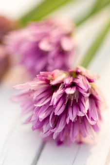 Free Chives Royalty Free Stock Photos - 19431858