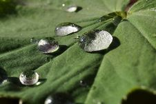 Free Waterdrop On A Leaf Royalty Free Stock Photography - 19431927