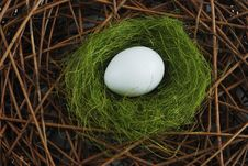 Free Egg In A Nest Over Branches Stock Images - 19432314