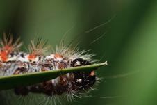 Free Caterpillar Royalty Free Stock Photo - 19432875