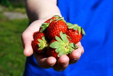 Free Strawberries In Hand Photo Illustration Stock Photography - 19435882