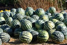 Free Water-melons Stock Image - 19436361