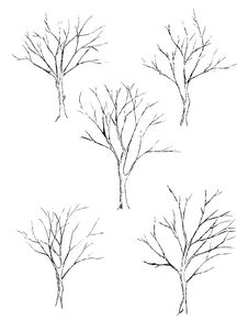 Free Tree Sketch Stock Photography - 19437052