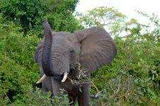 Free Elephant Royalty Free Stock Photo - 19437765