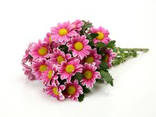 Free Pink Flowers Stock Image - 19438321
