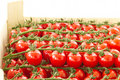 Free Cherry Tomatoes Stock Image - 19441791