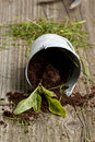 Free Sprout With Soil Stock Photography - 19442992