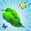 Free Green Leaf. Stock Image - 19448471