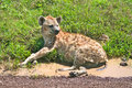 Free Spotted Hyena Resting On A Road Stock Photo - 19449880
