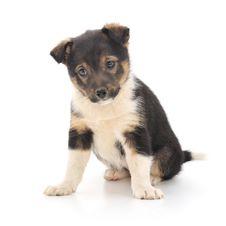 Free Baby Puppy Stock Photos - 19441703