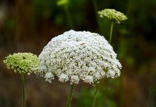 Free Field Of Flower Stock Photos - 19442403