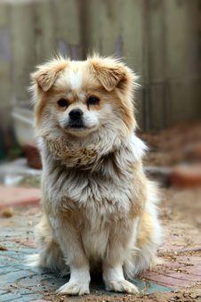Free Puppy Royalty Free Stock Photo - 19442915