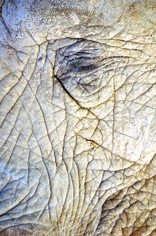 Close Up Texture Of An African Elephant Royalty Free Stock Photo