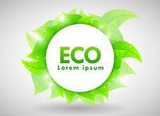 Free Eco Design Stock Image - 19443371