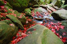 Free Maple Leaves Waterfall Royalty Free Stock Photo - 19443505