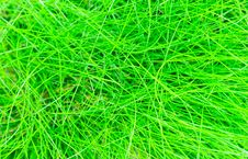 Free Abstract Background Of The Green Grass Stock Photography - 19444332
