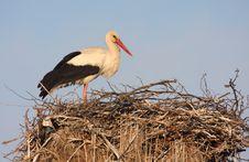 Free White Stork On Nest Royalty Free Stock Photos - 19444518