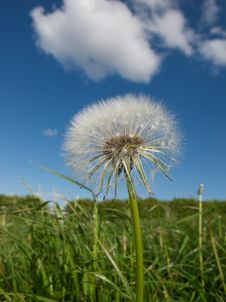 Free Dandelion Parachutes Stock Photo - 19445970
