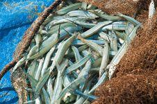 Free Fresh Fish Royalty Free Stock Image - 19447206