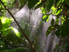 Free Rain Forest Stock Images - 19447334