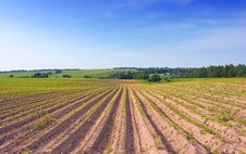 Free Photo With The Cultivated Ridges Of A Potato Field Royalty Free Stock Photo - 19449475