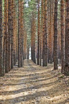 Spring Forest And The Trees On The Road Stock Image