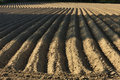 Free Furrows Stock Photos - 19450423