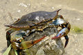 Free Crab At The Beach Royalty Free Stock Images - 19459039