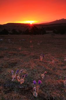 Free Flowers At Sunset Royalty Free Stock Photography - 19451477