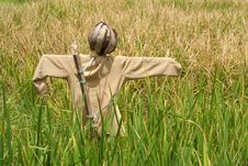 Free Coconut-headed Scarecrow Royalty Free Stock Photo - 19453615