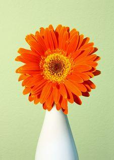 Free Orange Gerber Stock Images - 19453924