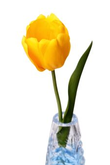 Yellow Tulip On White Royalty Free Stock Image