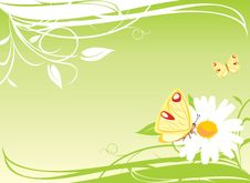 Free Chamomile And Butterflies On The Floral Background Stock Photos - 19454263