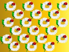 Pattern_Camomiles And Ladybirds Stock Photography