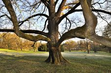 Free Tree In Park Stock Images - 19456104
