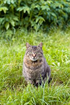 Free Cat In The Garden Royalty Free Stock Photos - 19456238