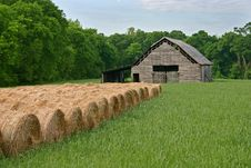 Free Rolls Of Hay Royalty Free Stock Photo - 19457105