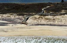 Free Bird S-eye View Of Beach Stock Photography - 19457122