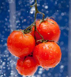 Free Fresh Tomato Stock Image - 19458531